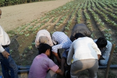Micro Irrigation, Wheat & Sugercane Cultivation, Gardener & Dairy Entrepreneurship Training at Various Location